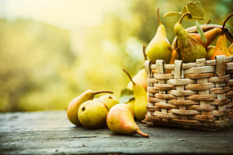 Autumn pear harvest