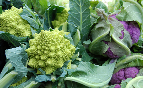 http://www.dreamstime.com/royalty-free-stock-images-green-purple-cauliflowers-image22412709